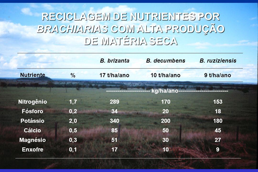 RECICLAGEM DE NUTRIENTES POR BRACHIARIAS COM ALTA PRODUÇÃO DE MATÉRIA SECA B. brizantaB. decumbensB. ruziziensis Nutriente %17 t/ha/ano10 t/ha/ano9 t/