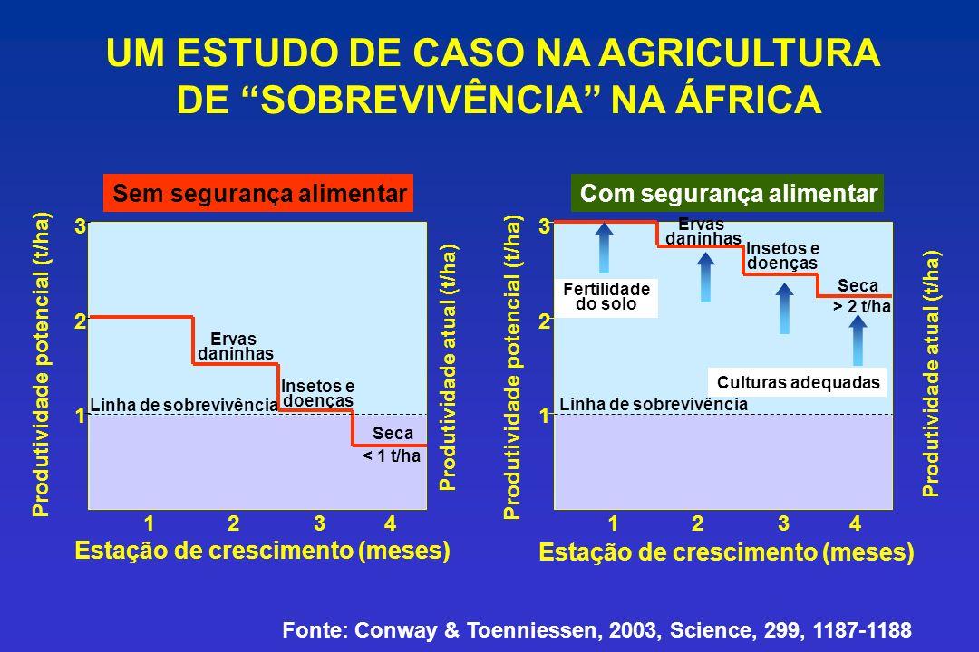 UM ESTUDO DE CASO NA AGRICULTURA DE SOBREVIVÊNCIA NA ÁFRICA Produtividade atual (t/ha) 1 2 3 1234 Ervas daninhas Insetos e doenças Seca Linha de sobre
