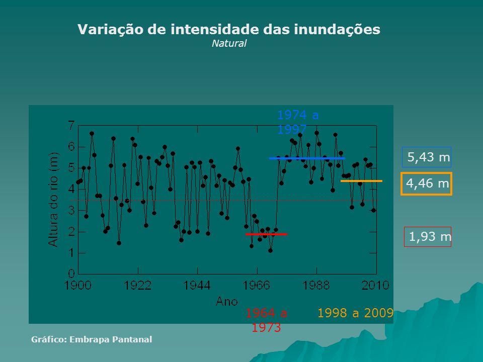 1,93 m 1964 a 1973 4,46 m 1998 a 2009 5,43 m 1974 a 1997 Variação de intensidade das inundações Natural Gráfico: Embrapa Pantanal