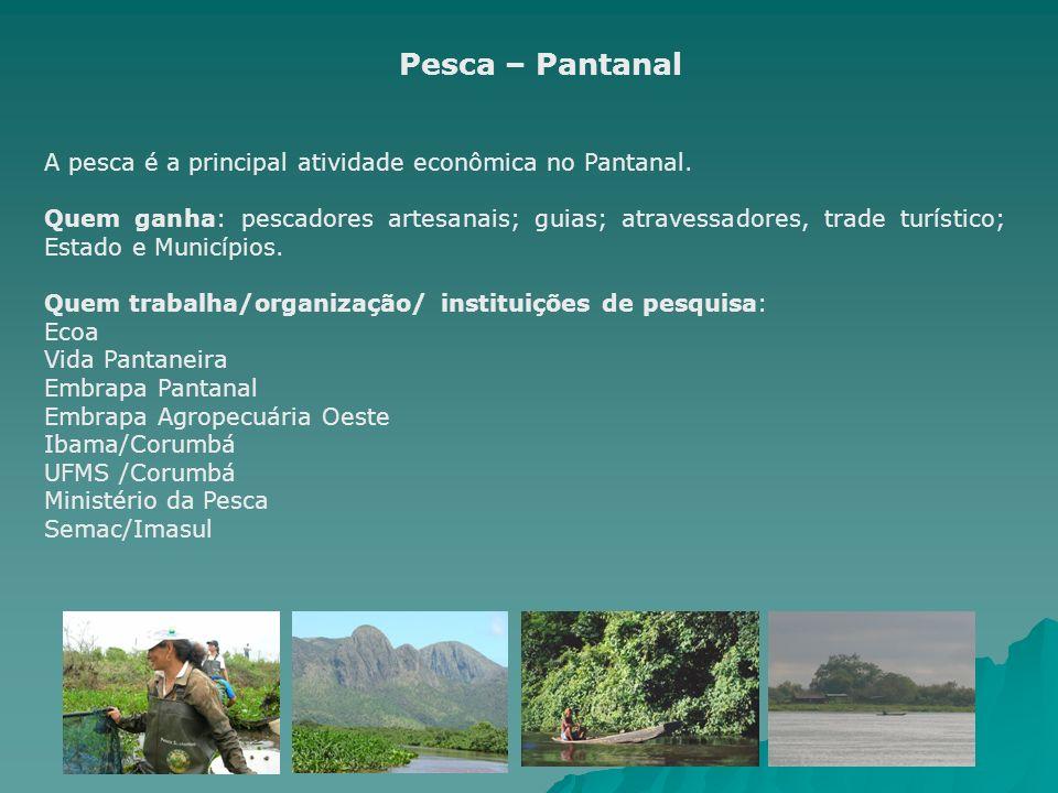 Pesca – Pantanal A pesca é a principal atividade econômica no Pantanal. Quem ganha: pescadores artesanais; guias; atravessadores, trade turístico; Est