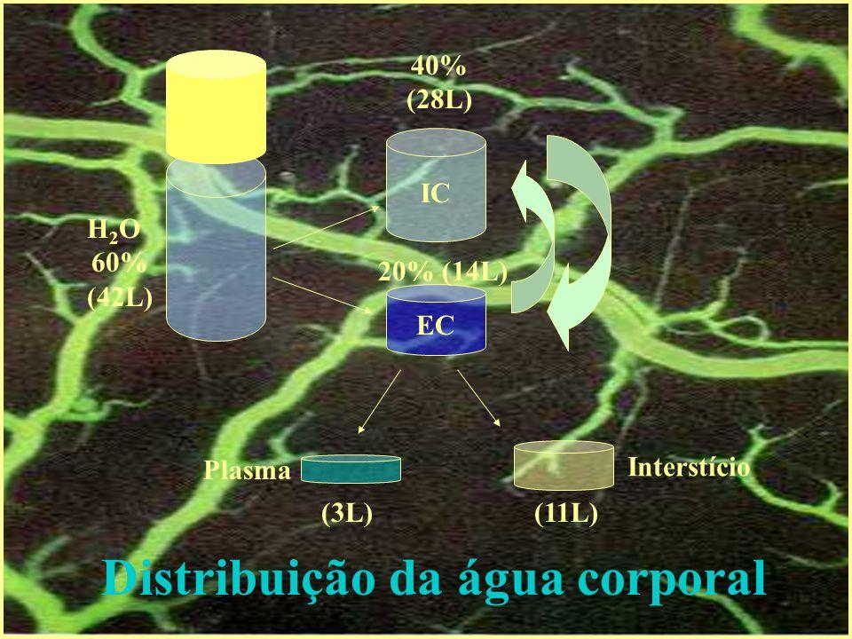 ESTRESSE RESPOSTA DE FASE AGUDA Catecolaminas Adenilato ciclase Adenilato ciclase
