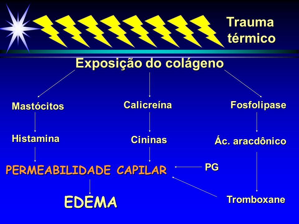 Colóide X Cristalóide Dias pós-queimadura 1 2 3 4 200 175 150 100 Volume tecidual pulmonar (vol.
