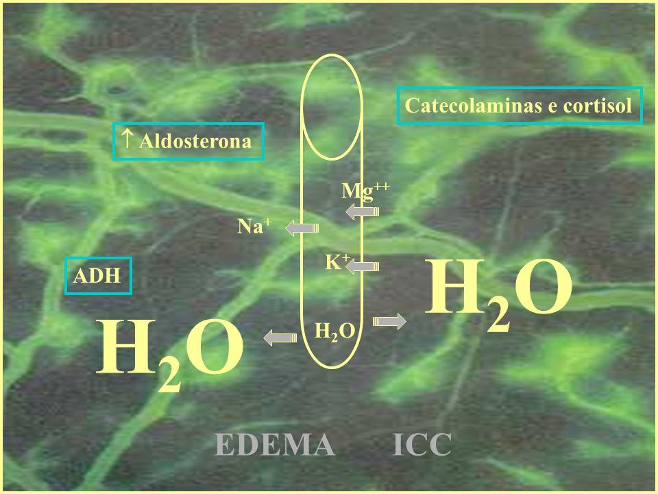 Aldosterona Na + Catecolaminas e cortisol Mg ++ K+K+ ADH EDEMA ICC H2OH2O H2OH2O H2OH2O