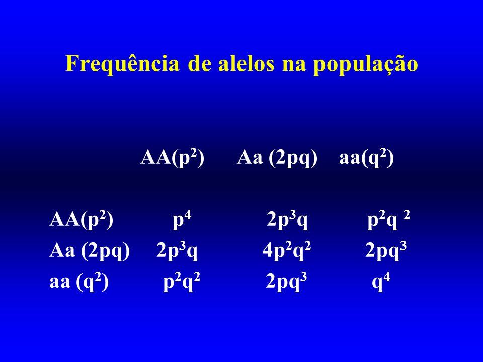 Frequência de alelos na população AA(p 2 ) Aa (2pq) aa(q 2 ) AA(p 2 ) p 4 2p 3 q p 2 q 2 Aa (2pq) 2p 3 q 4p 2 q 2 2pq 3 aa (q 2 ) p 2 q 2 2pq 3 q 4