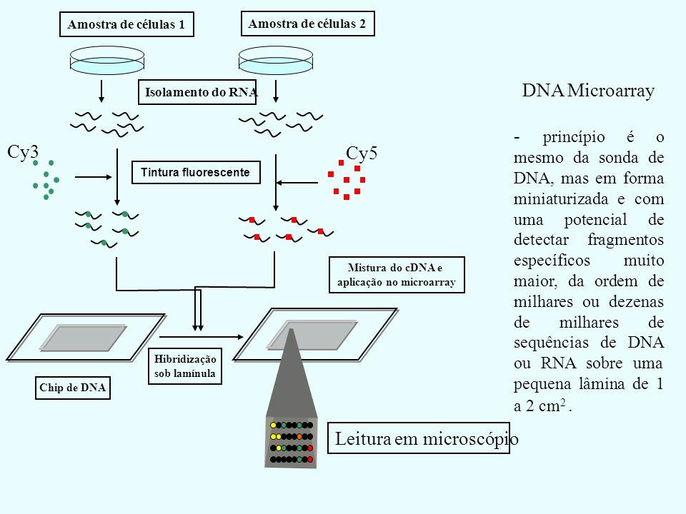 Amostra de células 1 Amostra de células 2Isolamento do RNA Cy5 Cy3 Tintura fluorescente Mistura do cDNA e aplicação no microarray Chip de DNA Hibridiz