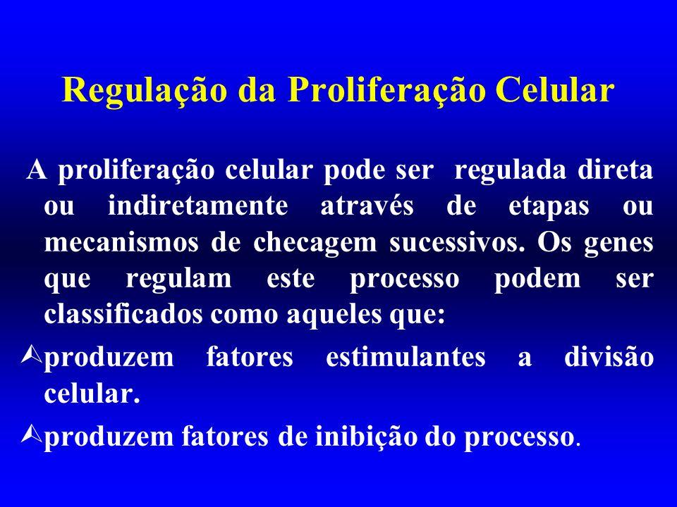 Regulação da Proliferação Celular A proliferação celular pode ser regulada direta ou indiretamente através de etapas ou mecanismos de checagem sucessi