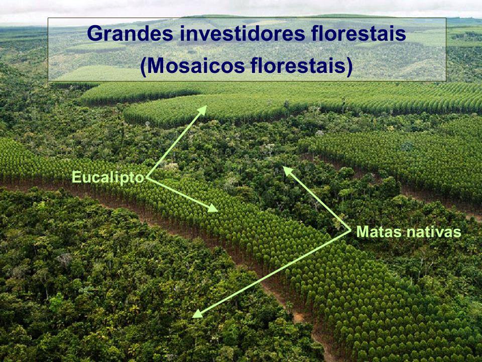 Grandes investidores florestais (Mosaicos florestais) Eucalipto Matas nativas