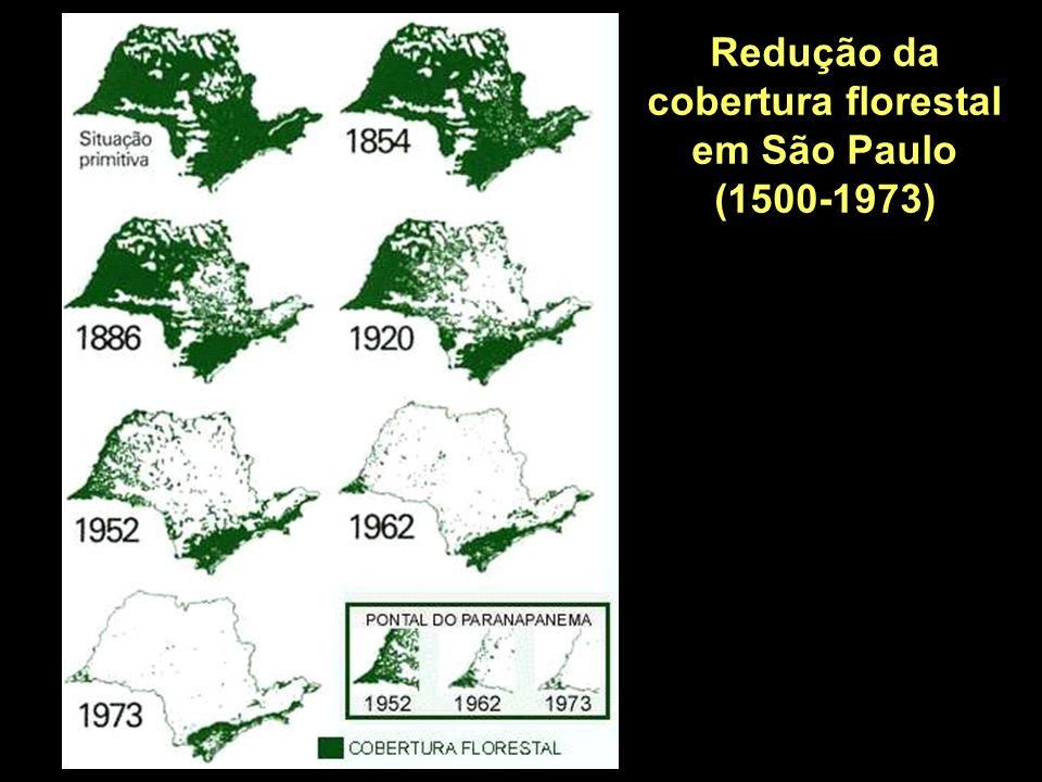 O DESAFIO: RECOMPOR A COBERTURA FLORESTAL COM VIABILIDADE ECONÔMICA