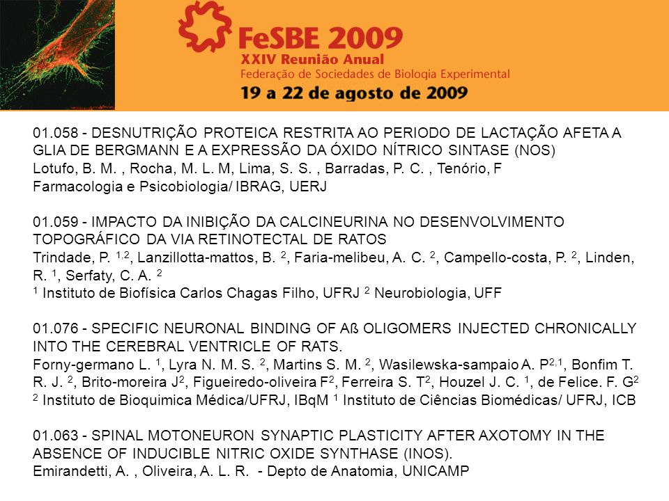 01.058 - DESNUTRIÇÃO PROTEICA RESTRITA AO PERIODO DE LACTAÇÃO AFETA A GLIA DE BERGMANN E A EXPRESSÃO DA ÓXIDO NÍTRICO SINTASE (NOS) Lotufo, B. M., Roc