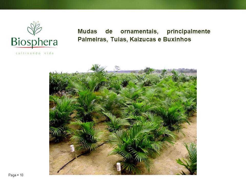 Page 10 Mudas de ornamentais, principalmente Palmeiras, Tuias, Kaizucas e Buxinhos