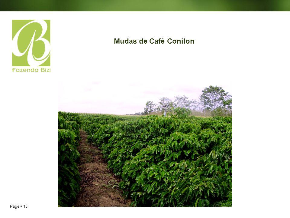 Page 13 Mudas de Café Conilon