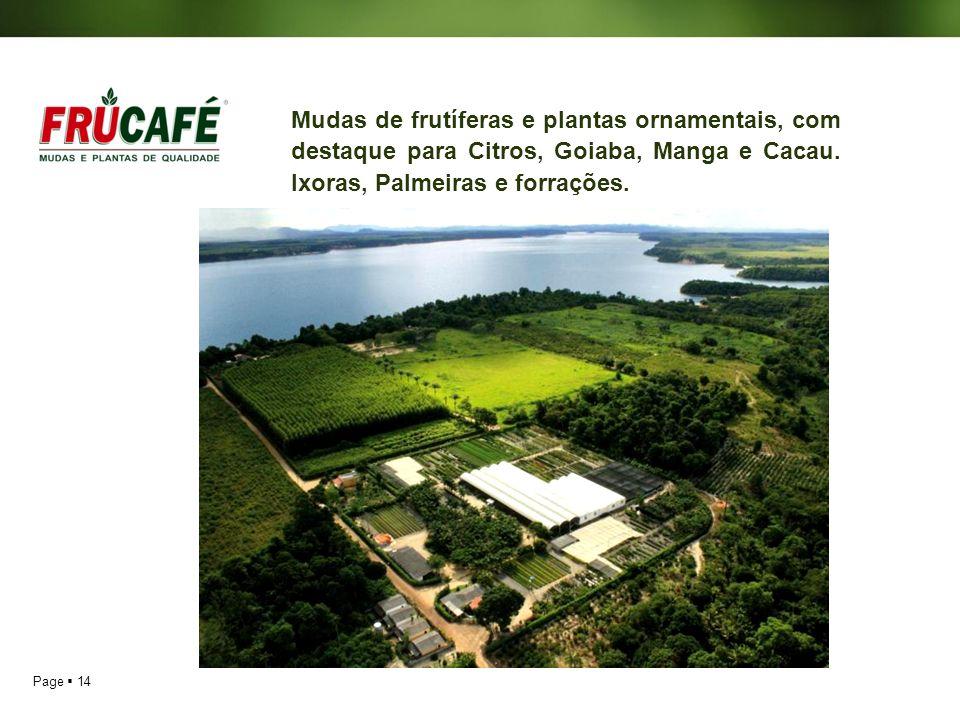 Page 14 Mudas de frutíferas e plantas ornamentais, com destaque para Citros, Goiaba, Manga e Cacau. Ixoras, Palmeiras e forrações.
