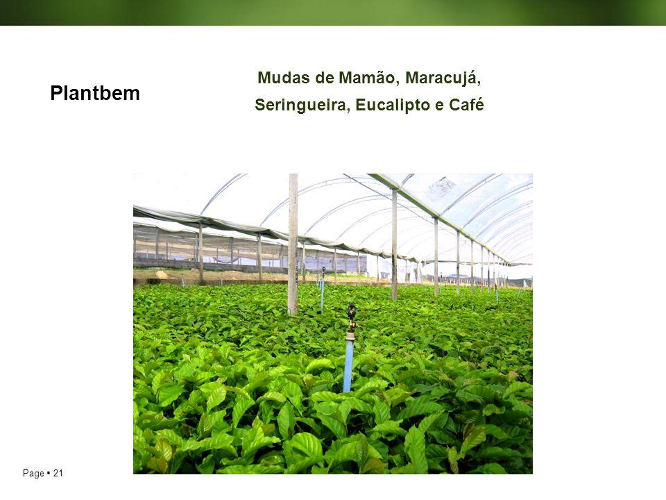 Page 21 Plantbem Mudas de Mamão, Maracujá, Seringueira, Eucalipto e Café