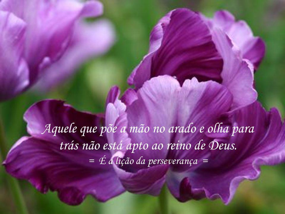 49 Olhai as aves do céu; não semeiam nem ceifam, mas nosso pai celestial as alimenta. = É a lição do desprendimento =