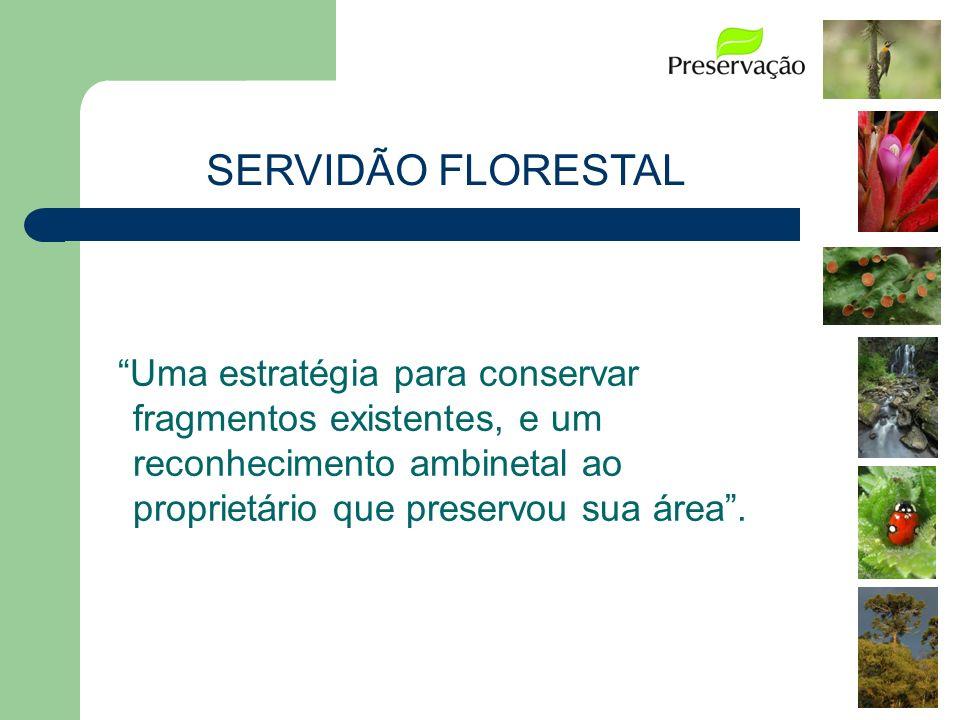 SERVIDÃO FLORESTAL Uma estratégia para conservar fragmentos existentes, e um reconhecimento ambinetal ao proprietário que preservou sua área.