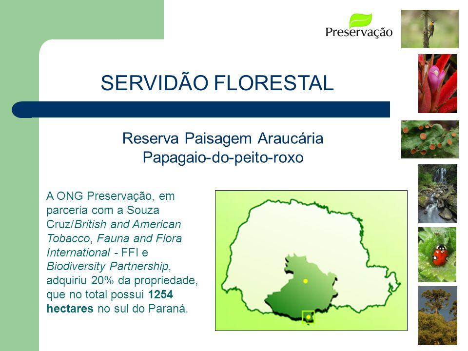Reserva Paisagem Araucária Papagaio-do-peito-roxo A ONG Preservação, em parceria com a Souza Cruz/British and American Tobacco, Fauna and Flora Intern