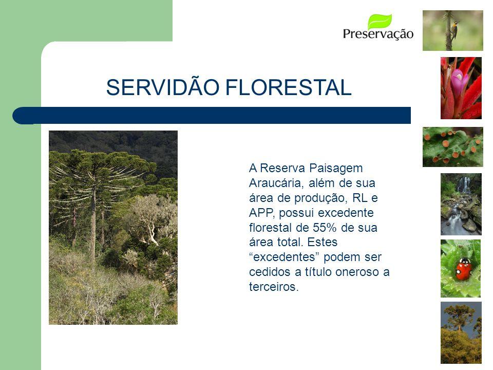 A Reserva Paisagem Araucária, além de sua área de produção, RL e APP, possui excedente florestal de 55% de sua área total. Estes excedentes podem ser