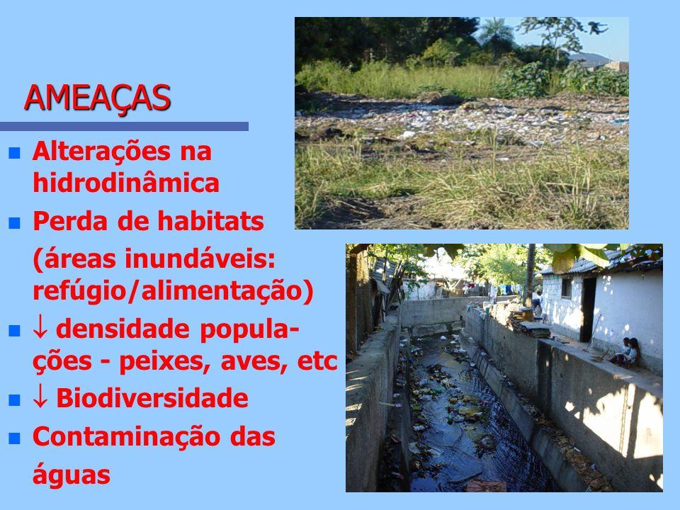 AMEAÇAS AMEAÇAS n n Alterações na hidrodinâmica n n Perda de habitats (áreas inundáveis: refúgio/alimentação) n n densidade popula- ções - peixes, ave