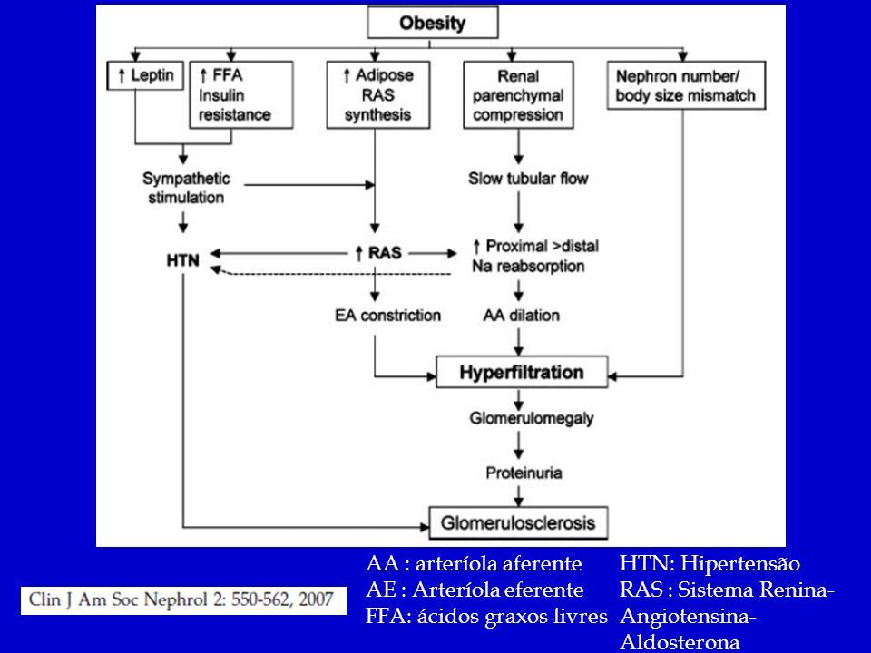 AA : arteríola aferente AE : Arteríola eferente FFA: ácidos graxos livres HTN: Hipertensão RAS : Sistema Renina- Angiotensina- Aldosterona