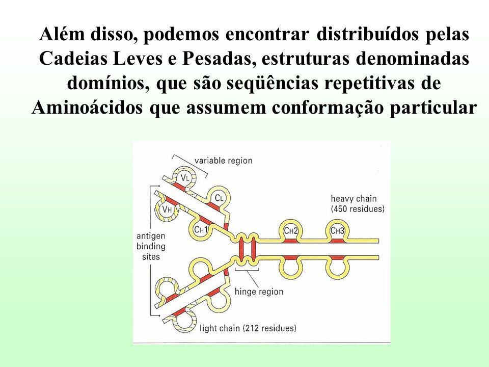 Além disso, podemos encontrar distribuídos pelas Cadeias Leves e Pesadas, estruturas denominadas domínios, que são seqüências repetitivas de Aminoácid