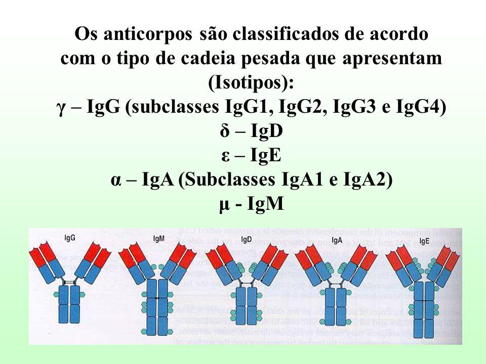 Os anticorpos são classificados de acordo com o tipo de cadeia pesada que apresentam (Isotipos): γ – IgG (subclasses IgG1, IgG2, IgG3 e IgG4) δ – IgD