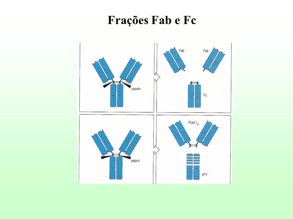 Frações Fab e Fc