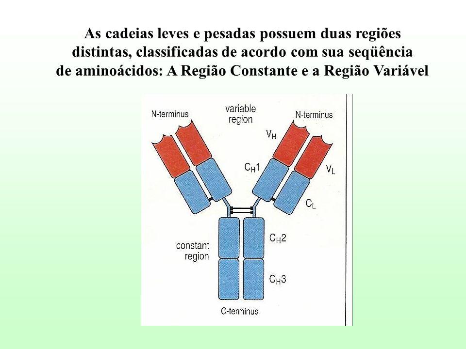 As cadeias leves e pesadas possuem duas regiões distintas, classificadas de acordo com sua seqüência de aminoácidos: A Região Constante e a Região Var