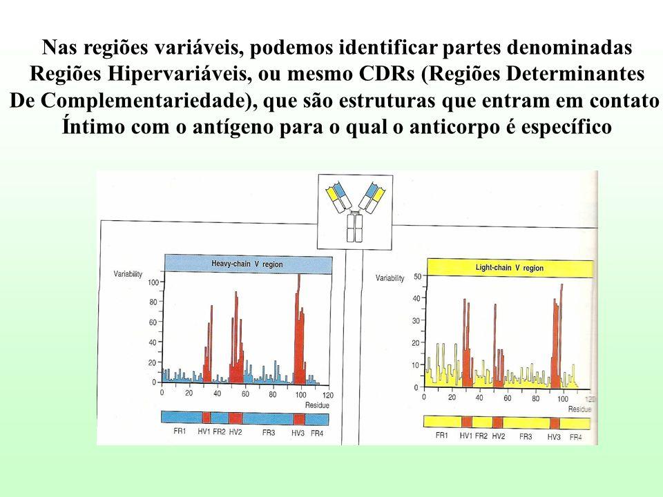 Nas regiões variáveis, podemos identificar partes denominadas Regiões Hipervariáveis, ou mesmo CDRs (Regiões Determinantes De Complementariedade), que
