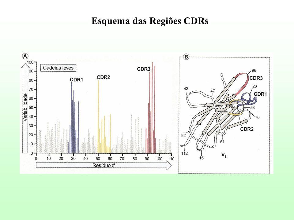 Esquema das Regiões CDRs