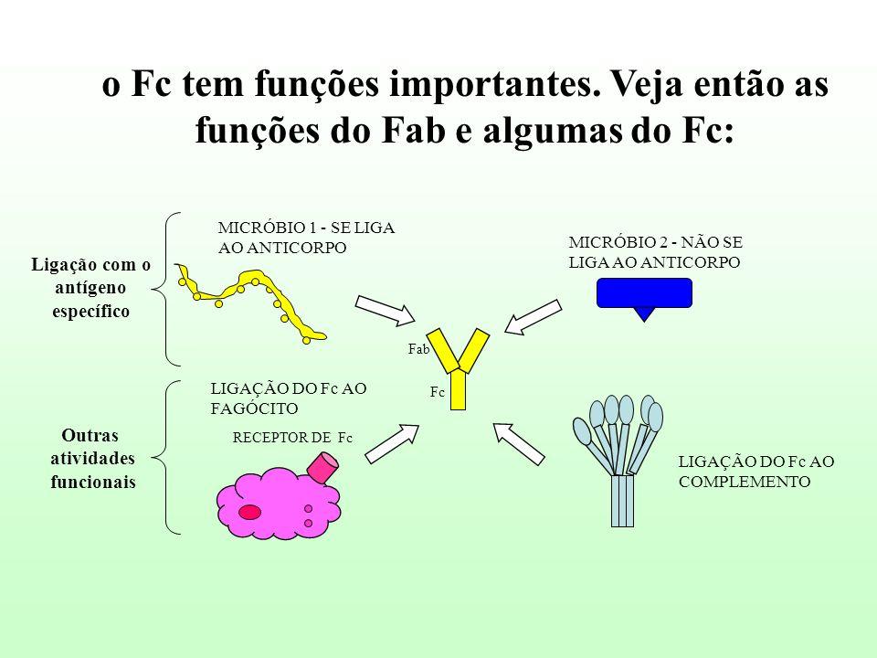 o Fc tem funções importantes. Veja então as funções do Fab e algumas do Fc: RECEPTOR DE Fc Fab Fc MICRÓBIO 1 - SE LIGA AO ANTICORPO MICRÓBIO 2 - NÃO S