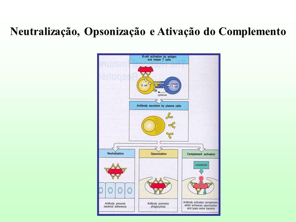 Neutralização, Opsonização e Ativação do Complemento