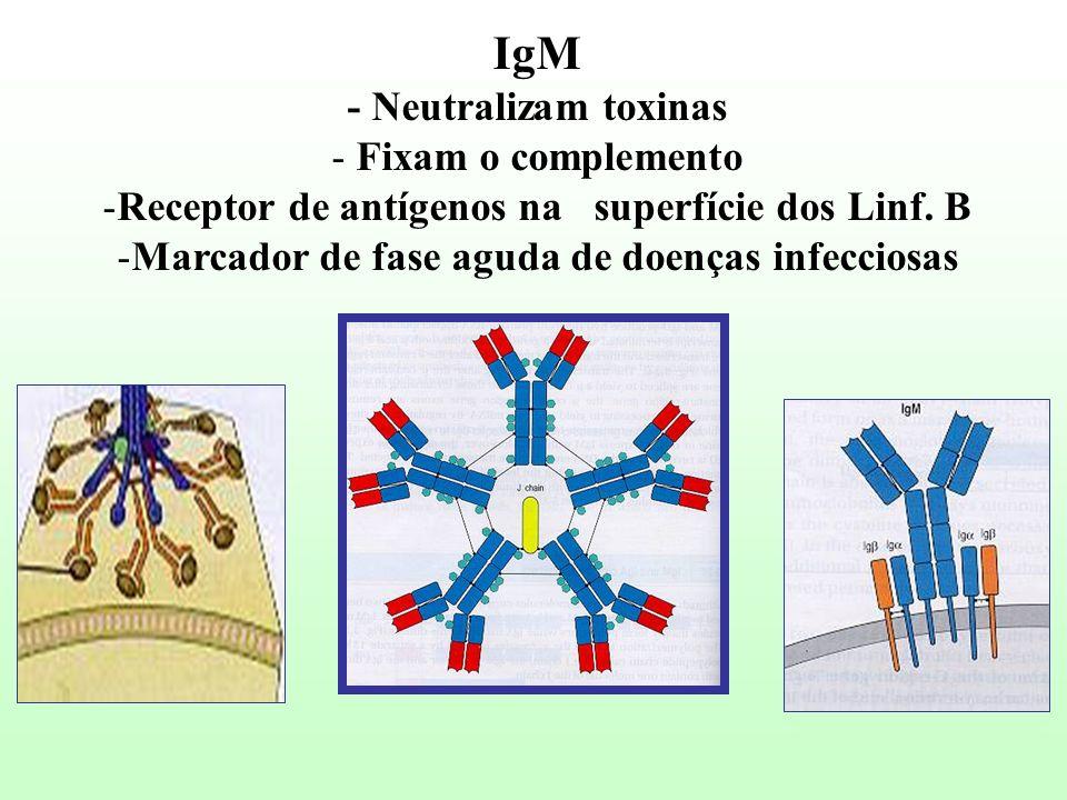 IgM - Neutralizam toxinas - Fixam o complemento -Receptor de antígenos na superfície dos Linf. B -Marcador de fase aguda de doenças infecciosas