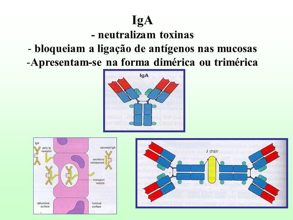 IgA - neutralizam toxinas - bloqueiam a ligação de antígenos nas mucosas -Apresentam-se na forma dimérica ou trimérica