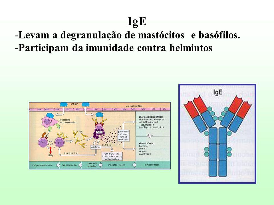 IgE -Levam a degranulação de mastócitos e basófilos. -Participam da imunidade contra helmintos