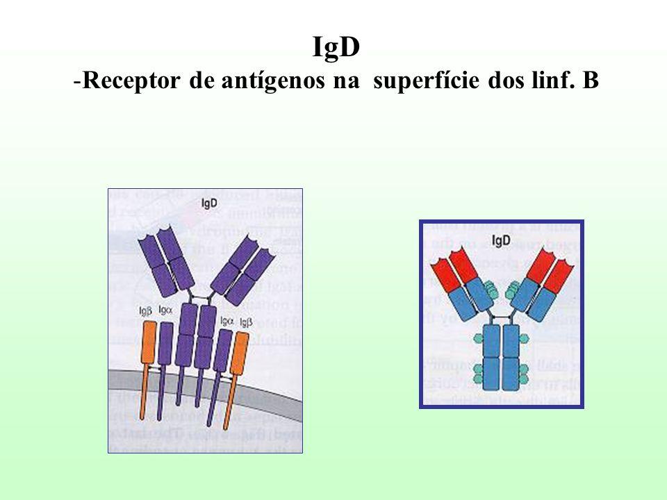 IgD -Receptor de antígenos na superfície dos linf. B