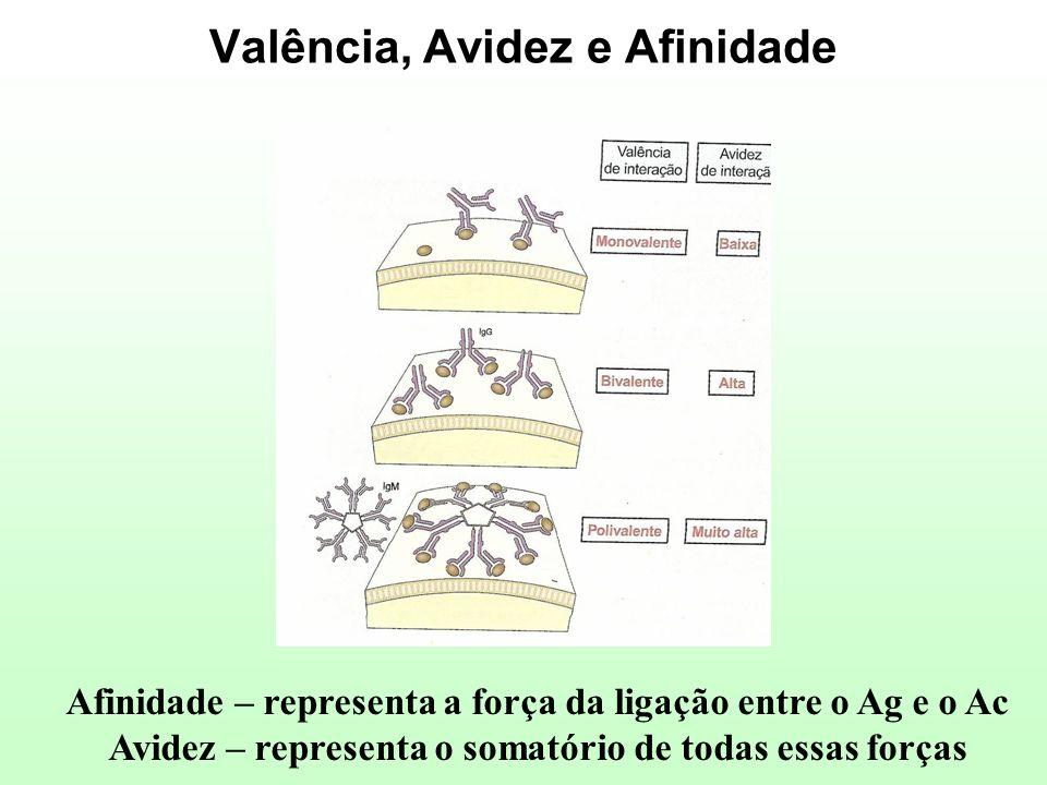 Valência, Avidez e Afinidade Afinidade – representa a força da ligação entre o Ag e o Ac Avidez – representa o somatório de todas essas forças