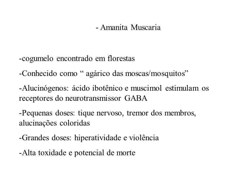- Amanita Muscaria -cogumelo encontrado em florestas -Conhecido como agárico das moscas/mosquitos -Alucinógenos: ácido ibotênico e muscimol estimulam
