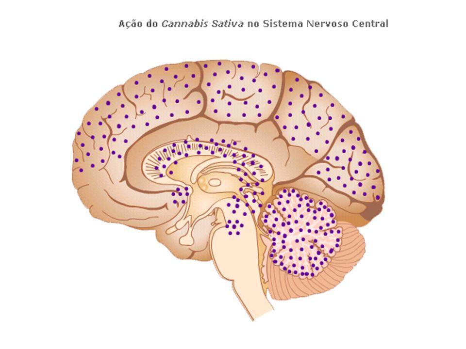 - MDA, DOM e outras drogas projetivas -MDA e DOM criadas sinteticamente por alterações da molécula da Anfetamina -MDA – 1970 – droga do amor -DOM – 1970 – droga STP -Efeitos parecidos com Mescalina e LSD -Precursoras das drogas: MDMA (Exctasy)