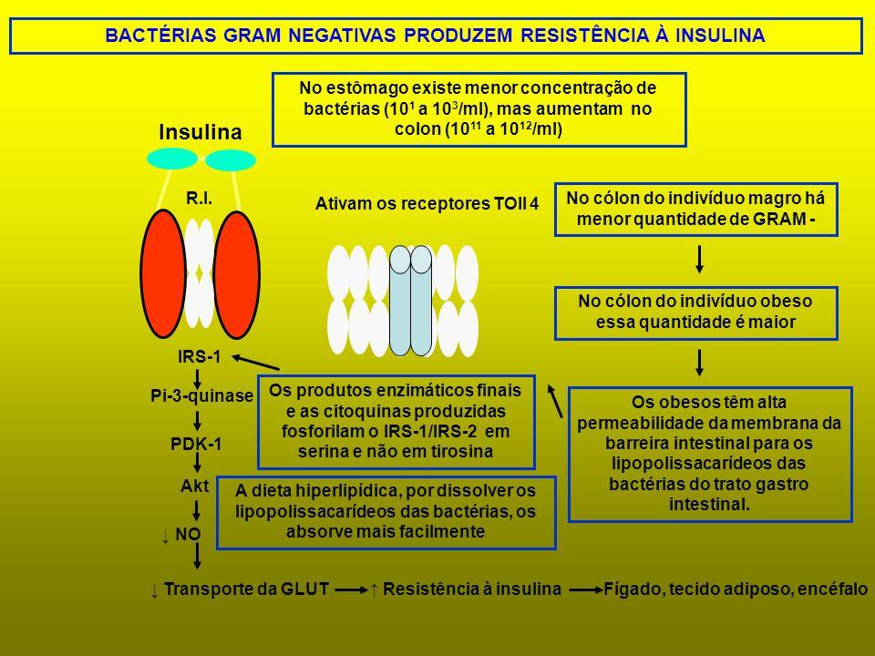 BACTÉRIAS GRAM NEGATIVAS PRODUZEM RESISTÊNCIA À INSULINA IRS-1 Pi-3-quinase PDK-1 Akt NO Transporte da GLUT No estômago existe menor concentração de b