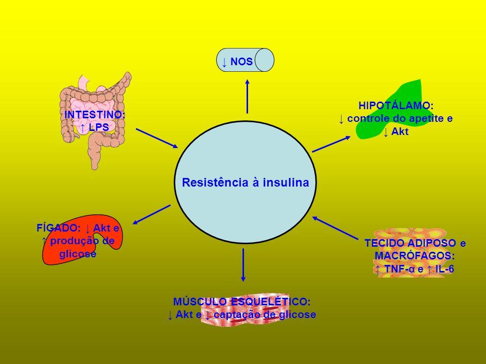 Resistência à insulina INTESTINO: LPS NOS HIPOTÁLAMO: controle do apetite e Akt FÍGADO: Akt e produção de glicose MÚSCULO ESQUELÉTICO: Akt e captação