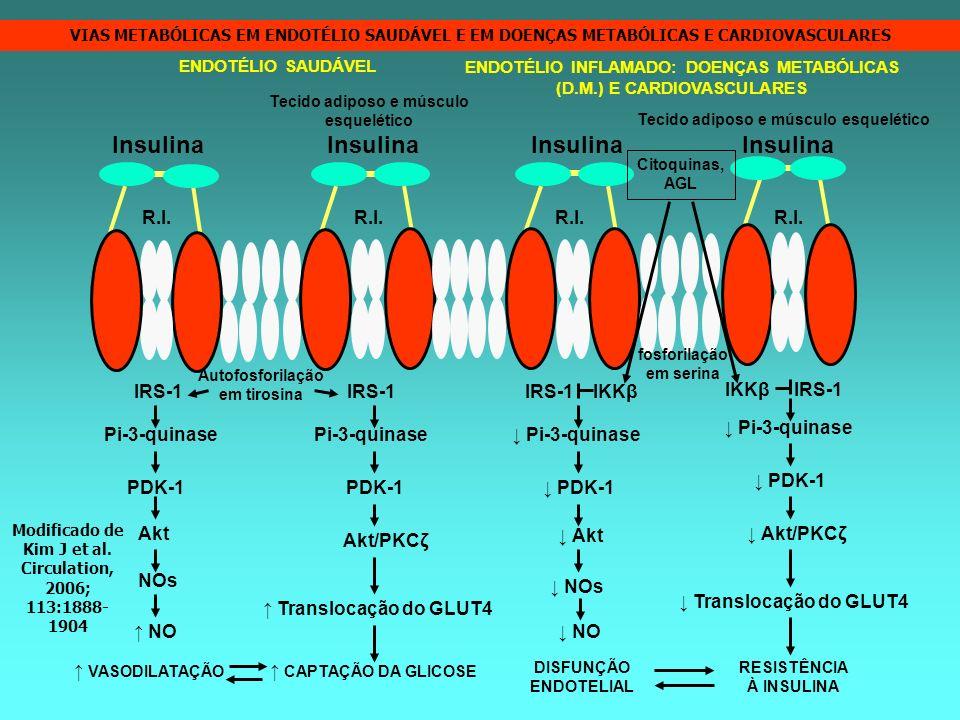 IRS-1 IRS-1 IKKβ IKKβ IRS-1 Insulina R.I. Pi-3-quinase PDK-1 Akt Akt/PKCζ Akt Akt/PKCζ NOs NO Translocação do GLUT4 NO Translocação do GLUT4 VASODILAT