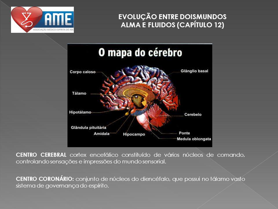 EVOLUÇÃO ENTRE DOISMUNDOS ALMA E FLUIDOS (CAPÍTULO 12) CENTRO CEREBRAL cortex encefálico constituído de vários núcleos de comando, controlando sensaçõ