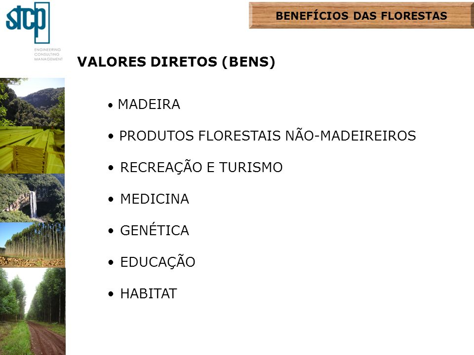 BENEFÍCIOS DAS FLORESTAS VALORES DIRETOS (BENS) MADEIRA PRODUTOS FLORESTAIS NÃO-MADEIREIROS RECREAÇÃO E TURISMO MEDICINA GENÉTICA EDUCAÇÃO HABITAT
