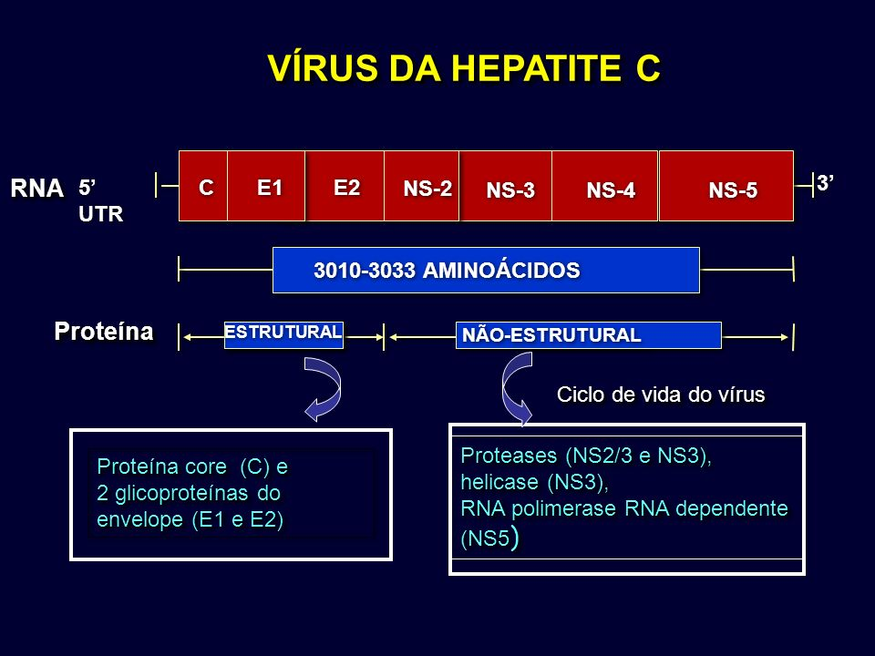 VÍRUS DA HEPATITE C RNARNA ProteínaProteína 3 3 ESTRUTURAL NÃO-ESTRUTURAL 3010-3033 AMINOÁCIDOS C C 5 UTR E2 NS-2 NS-3 NS-4 NS-5 E1 Proteína core (C)