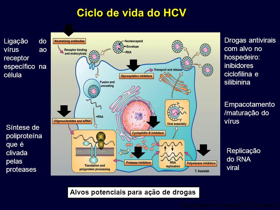 Ciclo de vida do HCV Modificado de T Asselah & P Marcellin, 2012 Alvos potenciais para ação de drogas Ligação do vírus ao receptor específico na célul