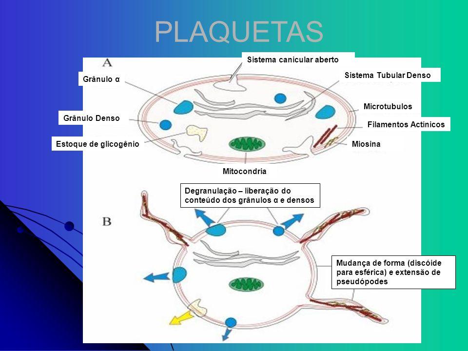 PLAQUETAS Sistema Tubular Denso Microtubulos Filamentos Actínicos Miosina Mitocondria Estoque de glicogênio Grânulo Denso Grânulo α Sistema canicular