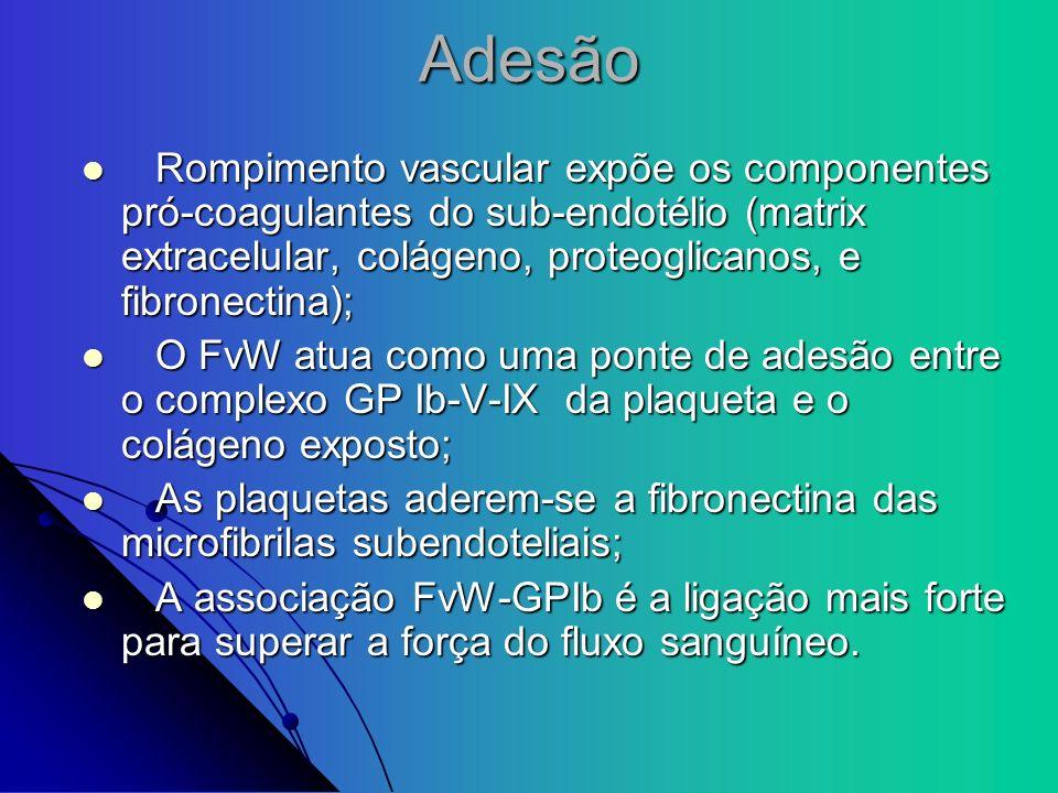Adesão Rompimento vascular expõe os componentes pró-coagulantes do sub-endotélio (matrix extracelular, colágeno, proteoglicanos, e fibronectina); Romp