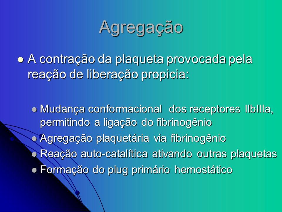 Agregação A contração da plaqueta provocada pela reação de liberação propicia: A contração da plaqueta provocada pela reação de liberação propicia: Mu