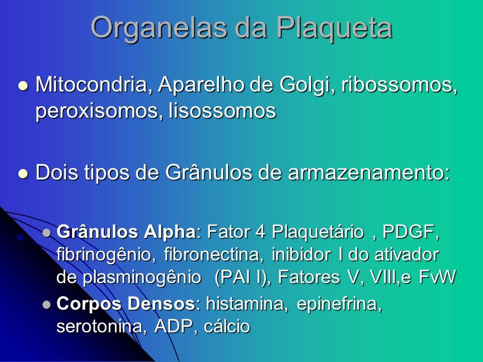 Organelas da Plaqueta Mitocondria, Aparelho de Golgi, ribossomos, peroxisomos, lisossomos Mitocondria, Aparelho de Golgi, ribossomos, peroxisomos, lis
