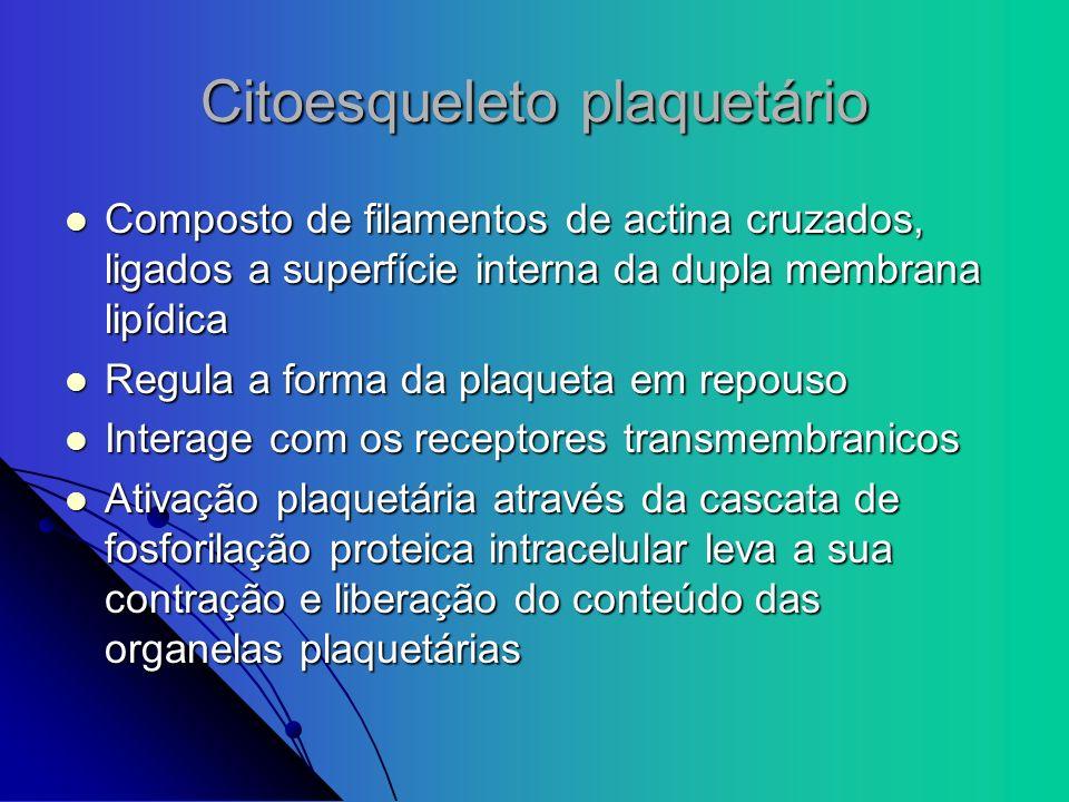 Citoesqueleto plaquetário Composto de filamentos de actina cruzados, ligados a superfície interna da dupla membrana lipídica Composto de filamentos de